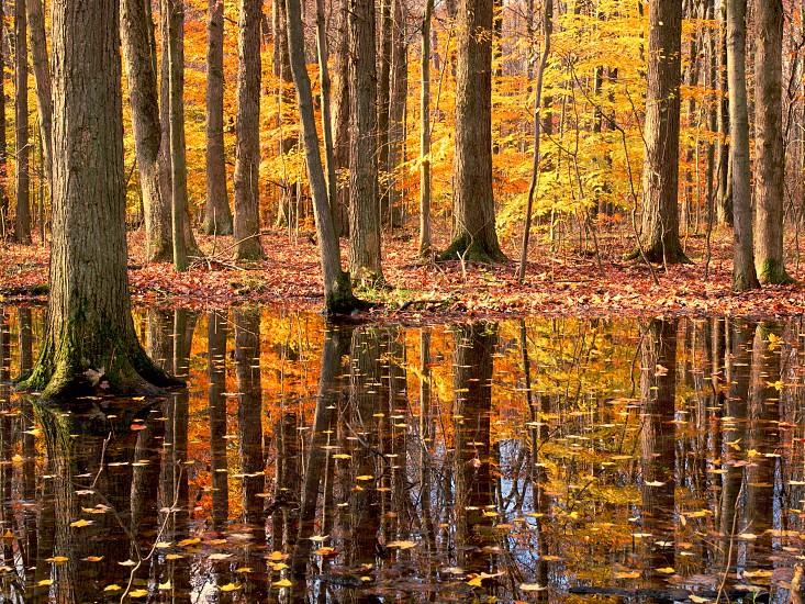 Autumn trees. Fall. Reflection. Yellow. photo