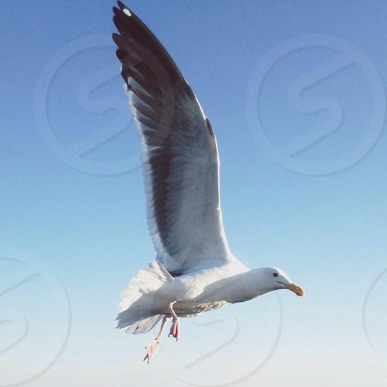 white bird flying photo