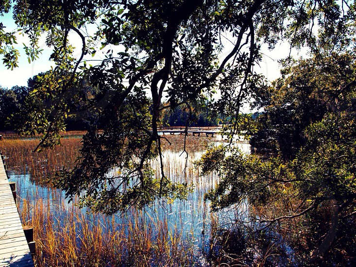 view of the pond with brown grass photo