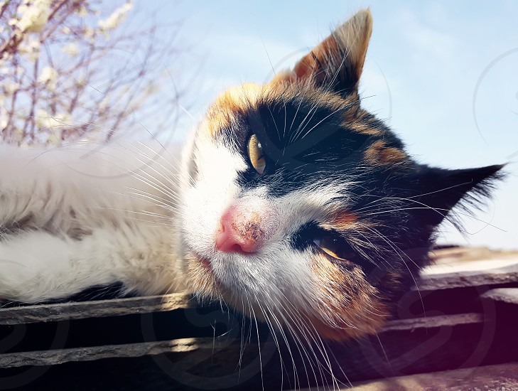 Playful domestic cat lying on a roof. Cute kitten portrait in a spring day photo