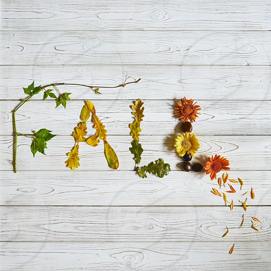 """Flat lay arrangement with word """"Fall"""" made with leaves and flowers photo"""