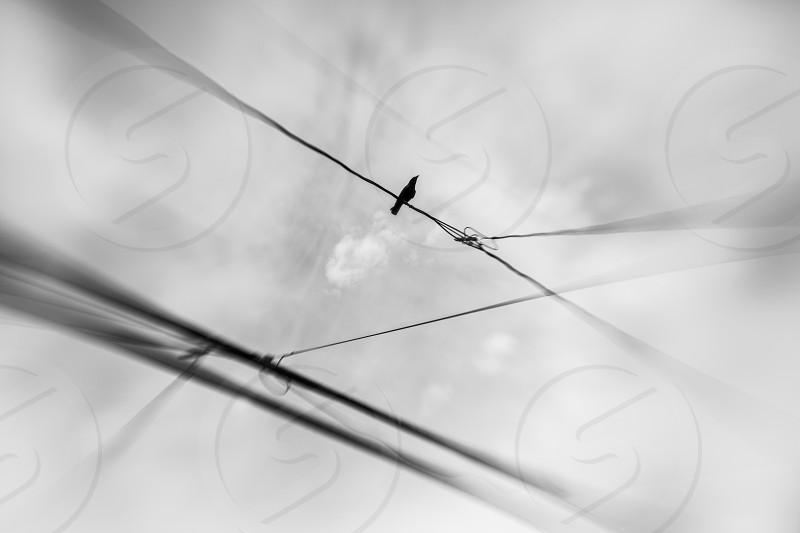 The Crow photo