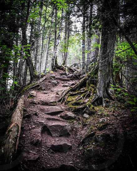 Rock stairway in the forest. photo