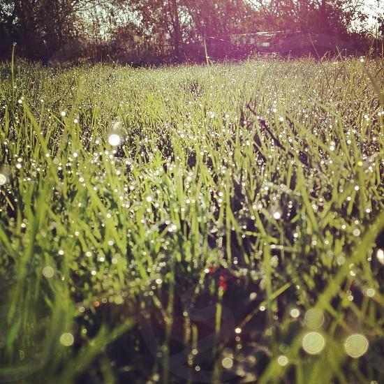 #huffpostsnap autumn morning dew grass grassy field sunrise landscape  photo