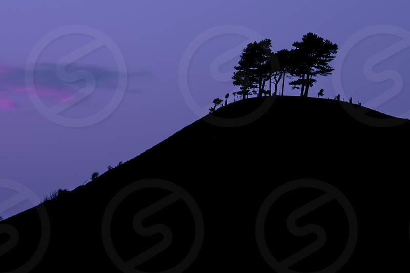 Trees shadow silhouette evening black Dorset colmers hill hill photo