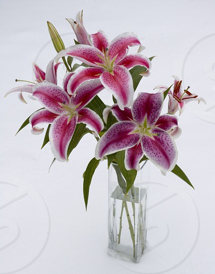 purple and white lilies in clear square glass vase photo