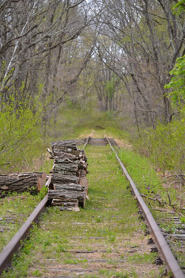 Peaceful railroad path in the woods photo