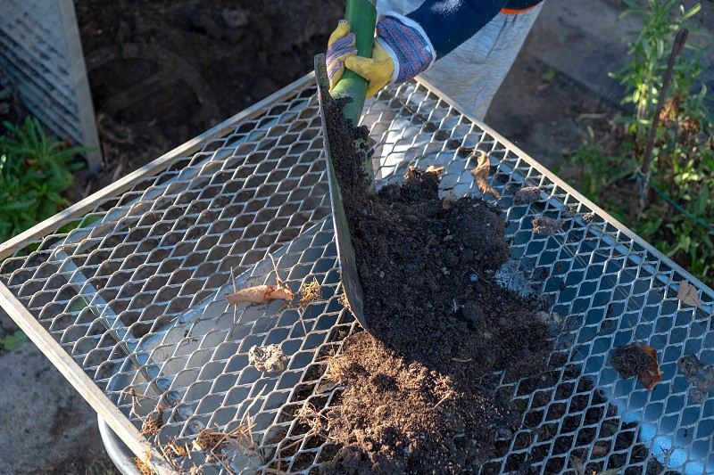 Humus is sieved with a shovel into a wheelbarrow for further processing. photo