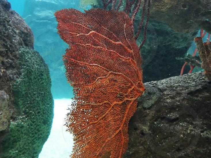 brown sea coral photo