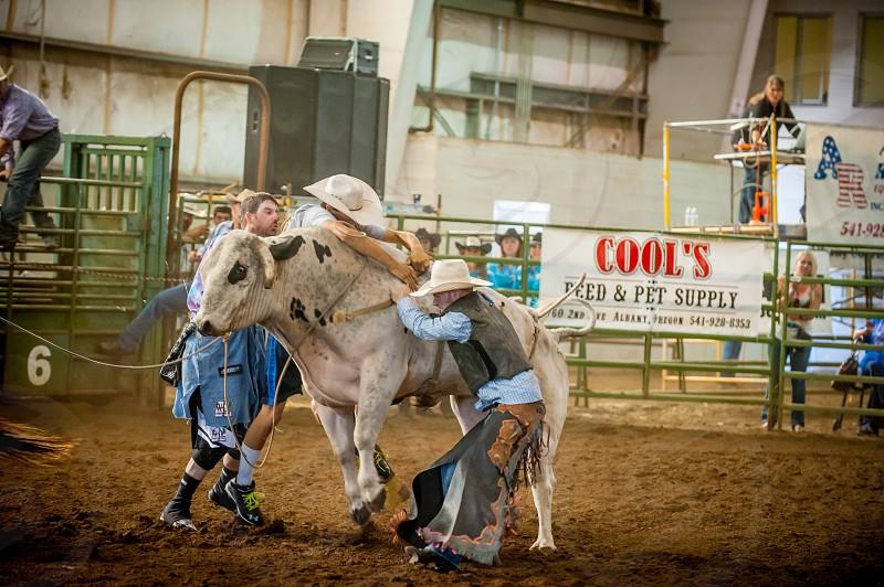 Bull riding cowboy bulls advertising photo