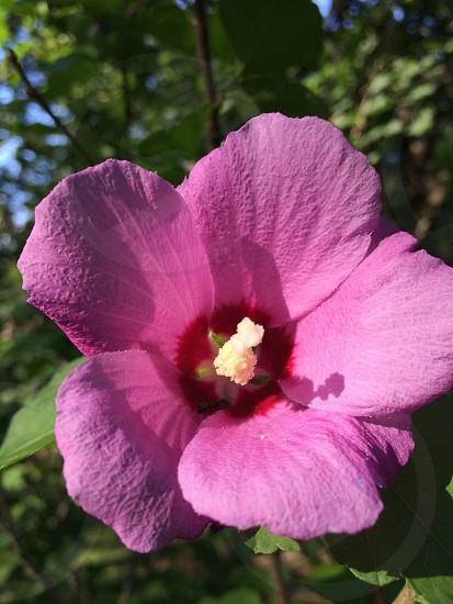 Flower purple spring photo