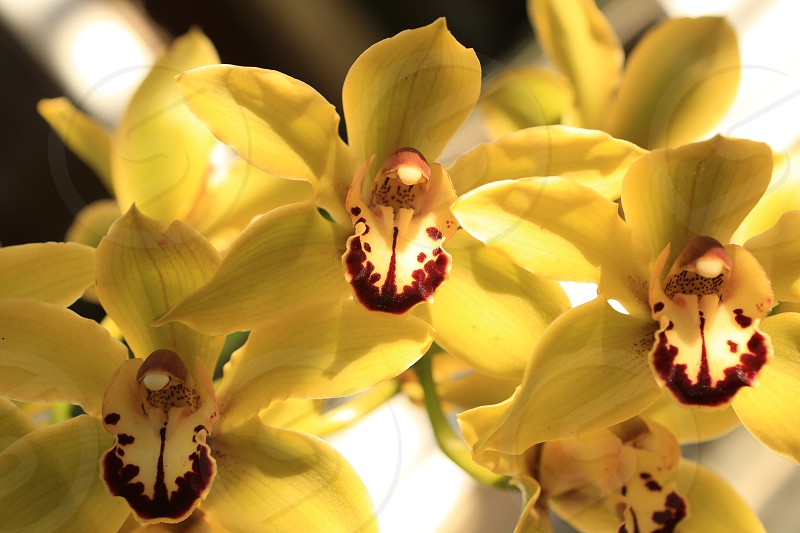 Orchids in spring bloom photo