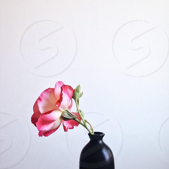 red flower in vase photo