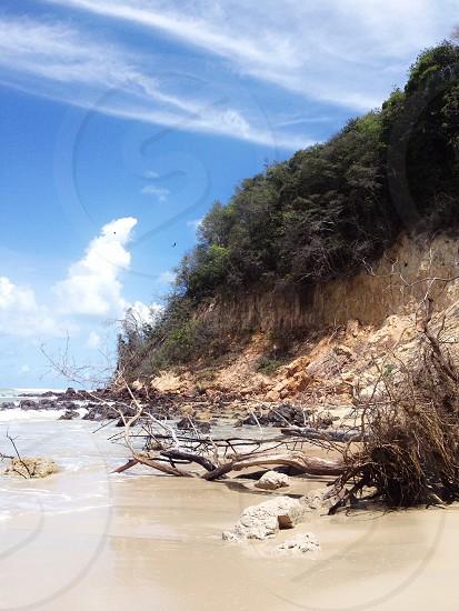 driftwoods on beach photo