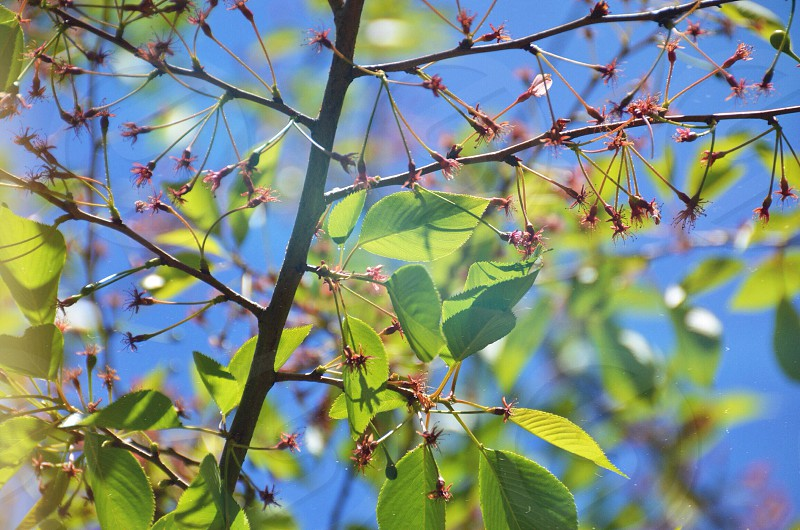 red flower green oval leafed tree photo