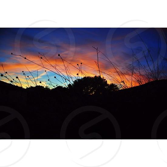 black tree silhouette over sunset photo