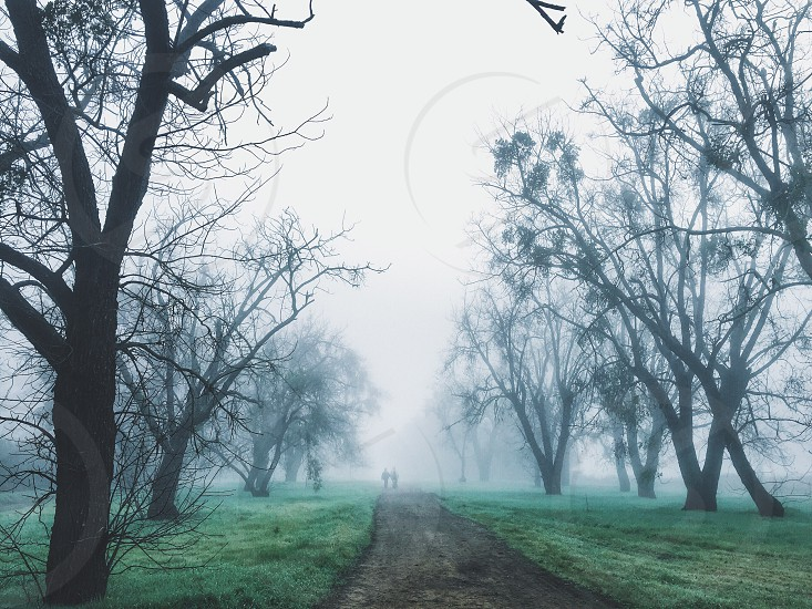 two people walking on dirt road between trees photo