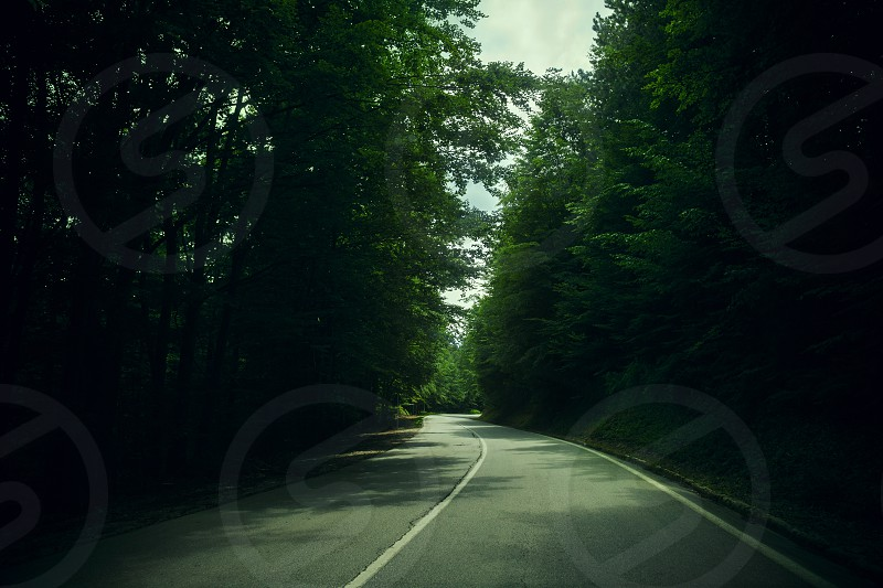 Travel by car scene from the dark forest simple composition summer time.  photo