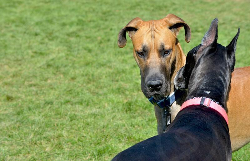 brown and black short hair medium breed dog on green field photo