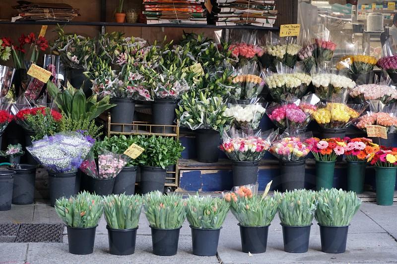Flower shop  photo
