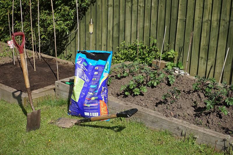 Planting the vegetable garden photo