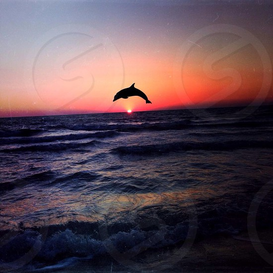 Dolphins and sunsets photo