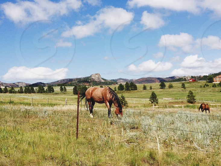 brown horse in the grass plain land photo