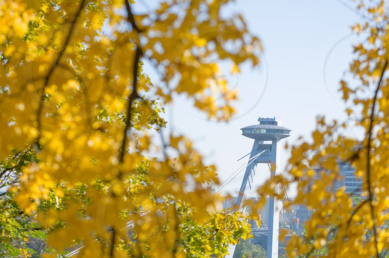 Bridge of the Slovak National Uprising in Bratislava Surrounded by Yellow Autumn Leaves photo