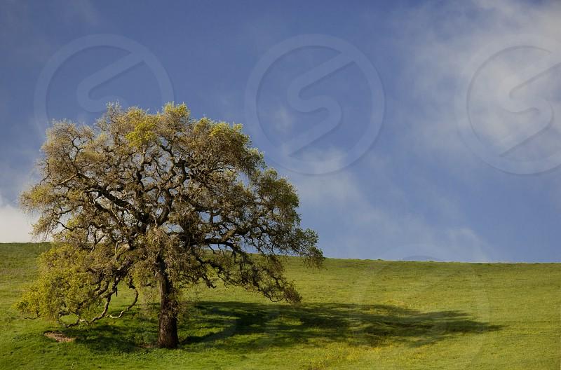 lone tree photo