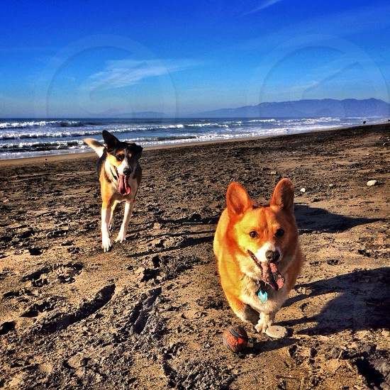 2 dogs on the seashore photo