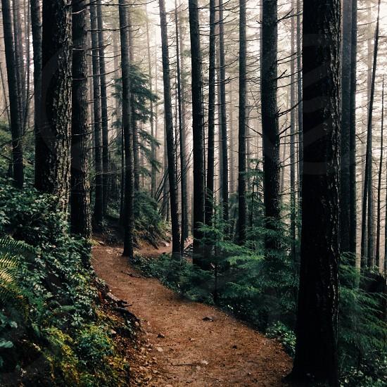 trail heading through woods photo