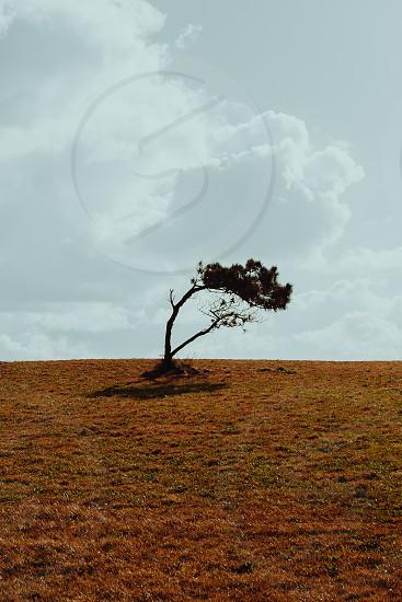 the tree photo