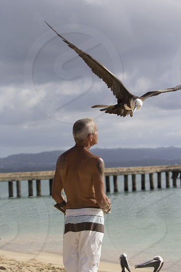 man on beach with a bird flying over him photo