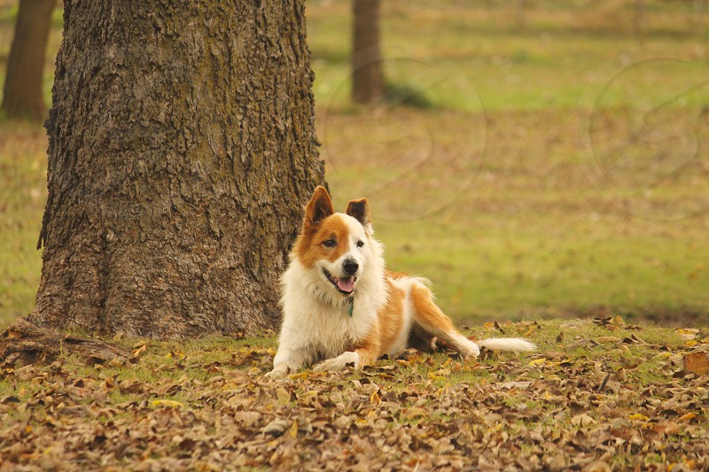 Dog in the Fall. photo