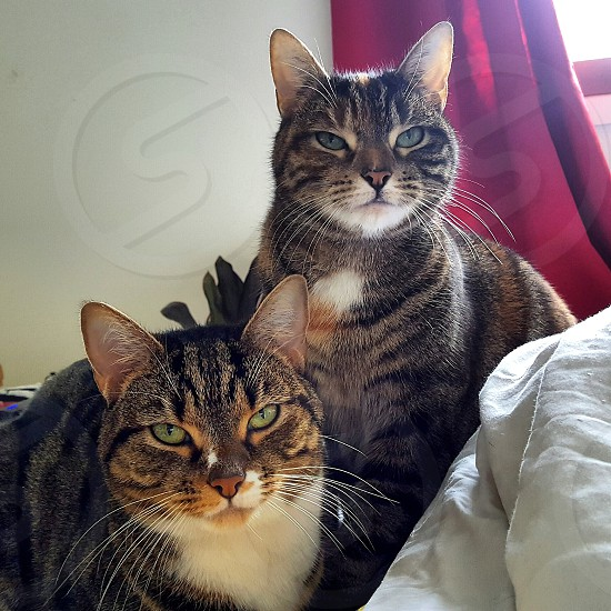 two cats in bed photo