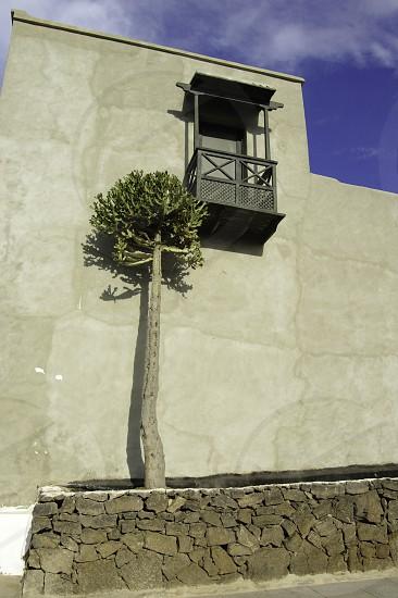 green tree near wall photo