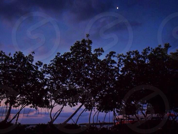 tree photography  photo