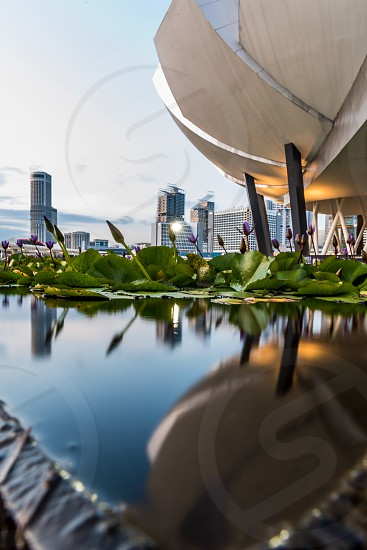 Water lily reflection Singapore architecture ArtScience Museum photo