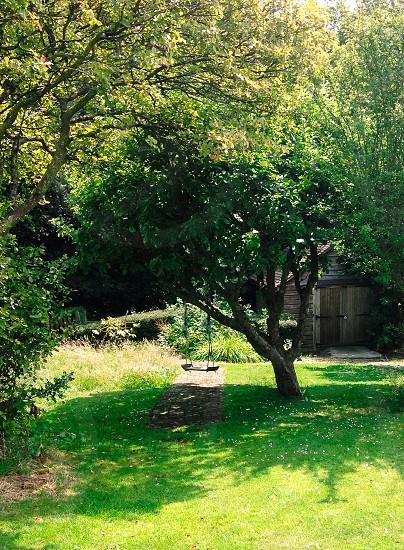 Swing under tree in English garden photo