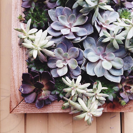 Succulents wall plants spring plant grow inspire growth new green brown wood frame photo