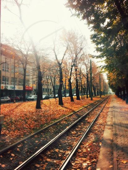 Waiting for autumn... photo