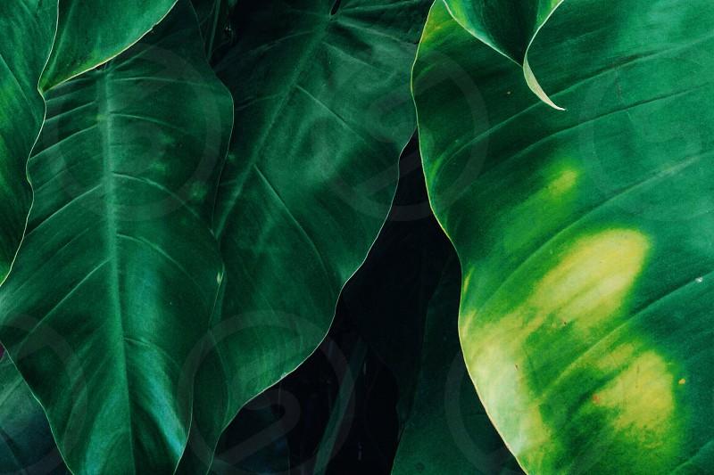 Nature textures photo