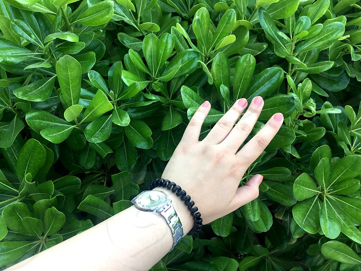 Green garden around the house. Green leaves and hand.  photo