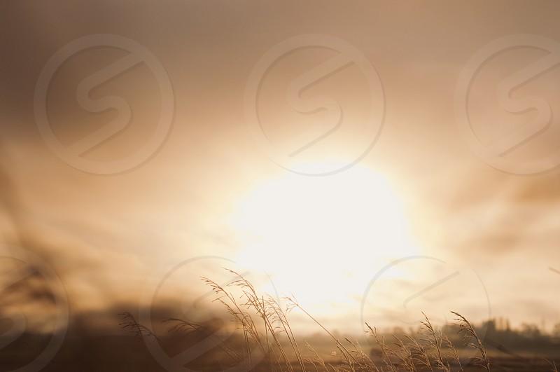 morning sun countryside. photo