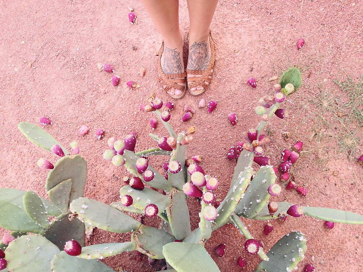 person in brown flat sandals and green cactus plant photo