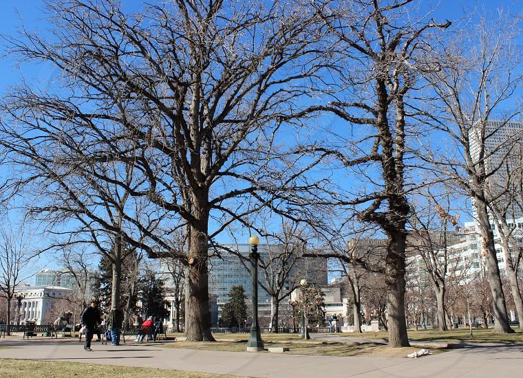 gray trees on park photo