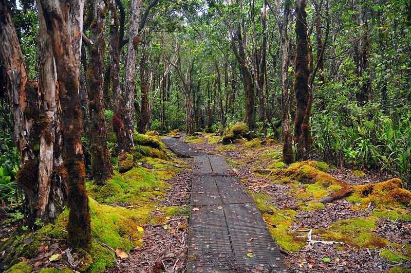 Alakai Swamp Trail Kauai Hawaii photo