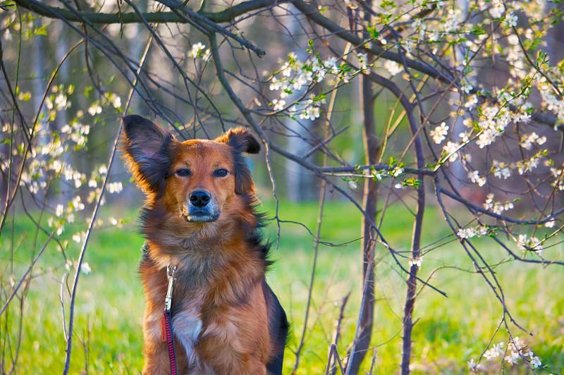 Lucky Dog photo