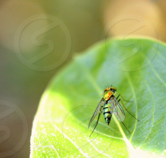 Macro photo of a small fly sitting on a green leaf in a garden with a bokeh background.  photo