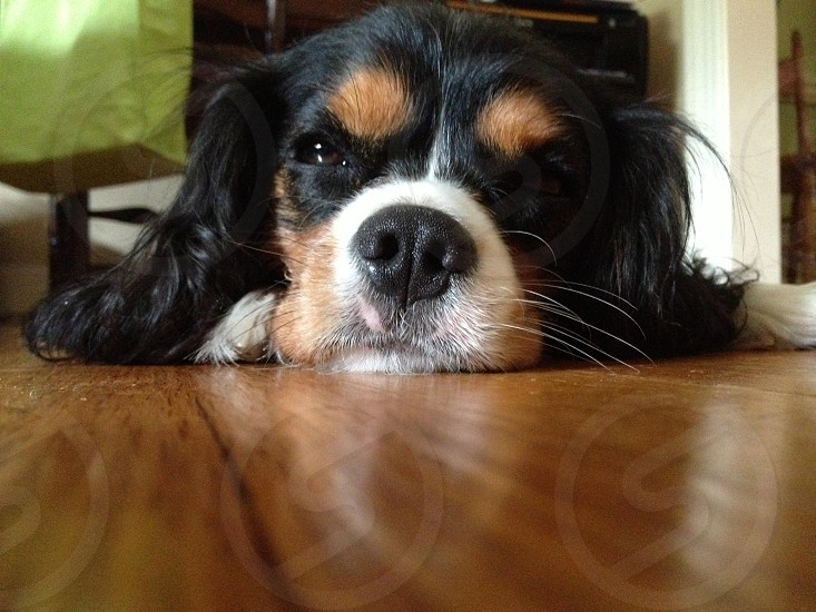 My puppy.  photo